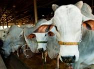 Rural Development: Family Farming in Mato Grosso