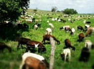 Agriculture and Livestock in Rio Grande do