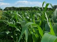 Ethanol Production: Brazilian Sugarcane Industry