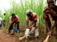 Agriculture in Côte d'Ivoire: Outlook for