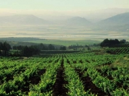 Future of Lebanese Wine Depends on Stability and