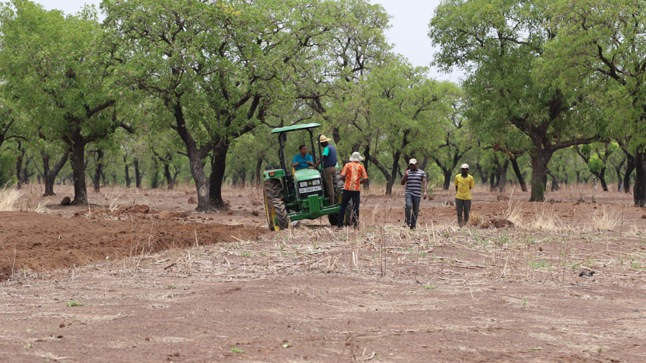 Land Issues and Other Challenges of Ghana's Agriculture