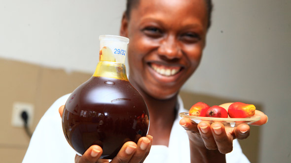 Palm Oil Sector: SIFCA - Ivorian Palm Oil Powerhouse