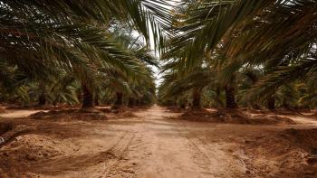 Agribusiness-overview-Egypt-agribusiness-is-poised-for-growth