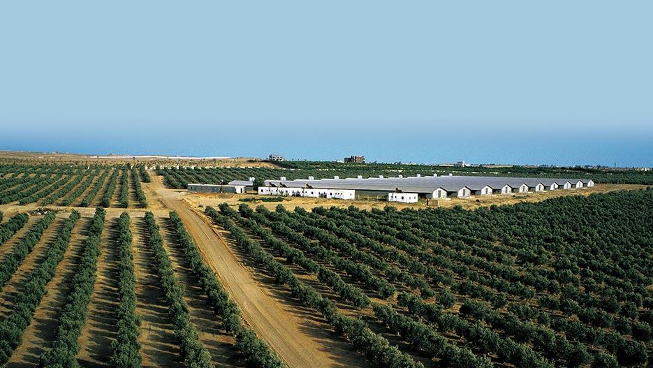 Top Agriculture & Agribusiness Companies in Egypt