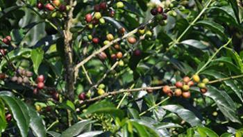 agriculture-companies-ethiopia