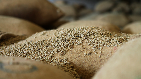 Ethiopia S Export Commodities And Markets Coffee Gold Fluctuating Prices