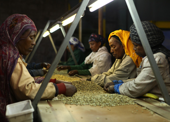 coffee processing Ethiopia