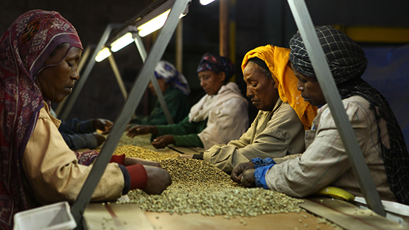 Coffee industry in Ethiopia: 2014 will be very challenging for Ethiopian coffee exporters