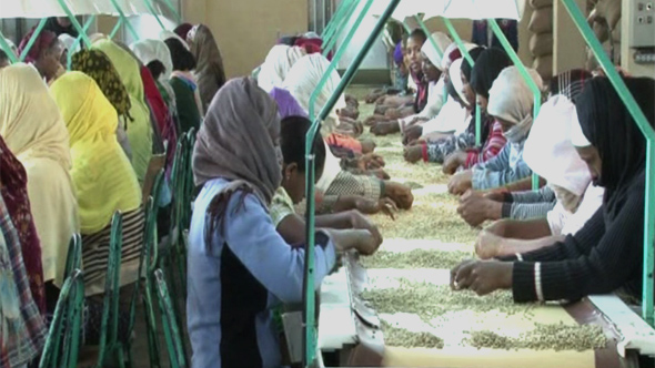 Aleta Land Coffee's facilities and green business in Ethiopia