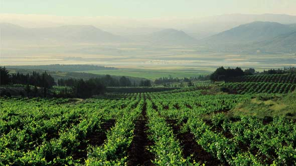 Future of Lebanese Wine Depends on Stability and Competition