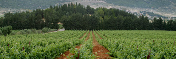 Lebanon wine production