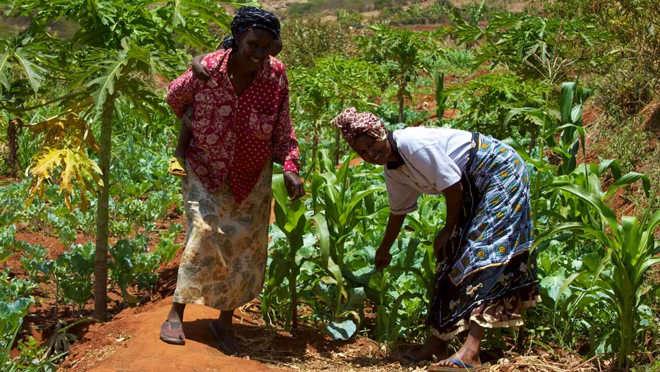 agriculture and agroindustry in Mozambique