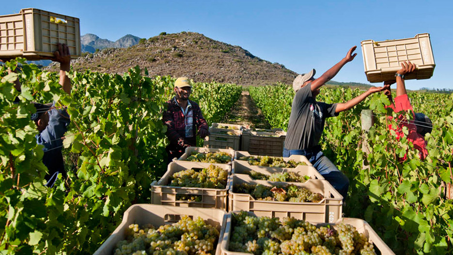 Wines of South Africa: Exports of South African Higher-tier Wines